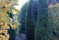 bendy hedges