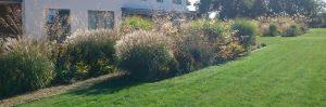 natural grass planting