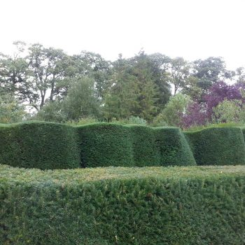 neat hedge