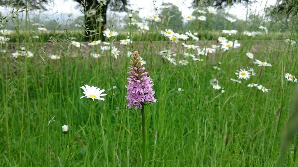 single purple flower