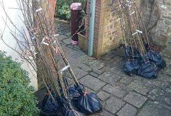 trees in bags