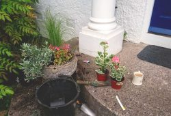 pot planting with a cup of tea