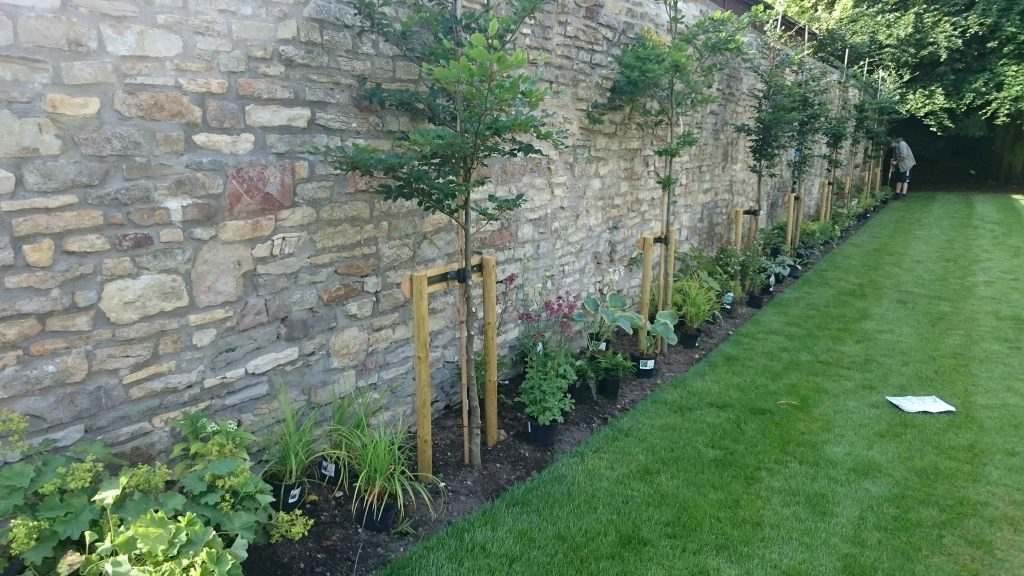Planting A Pleached Hedge And Woodland Border Edwards Gardens